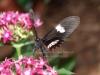 hodowla-spija-nektar