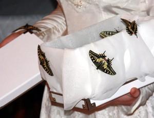Motyle naślub - wylot zpudełka. Nazdjęciu Paź królowej, dostojny krajowy gatunek.