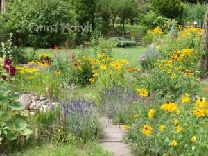 Typowy ogród dedykowany motylom
