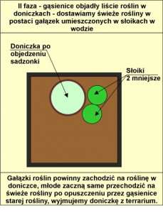 schemat wymiany roslin_F_02