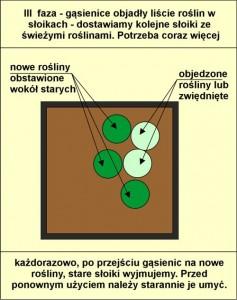 schemat wymiany roslin_F_03