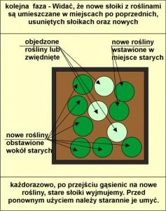 schemat wymiany roslin_F_04