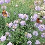 Motyle naDriakwiach