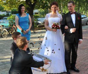 Motyle na ślubie